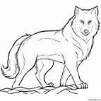 Раскраски волков карандашом