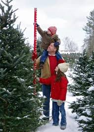Choose and Cut Your Own Christmas Tree