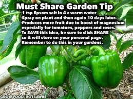 epsom salt for gardening. Plain For Via Grow Food Not Lawns Epsom Salt Must Share Garden Tip With For Gardening