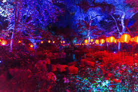 california s descanso gardens a forest of lights