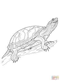 Western Painted Turtle Coloring Page Free
