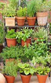 pin on garden pots