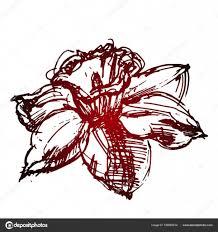 эскиз татуировки красный цветок нарцисса векторное изображение