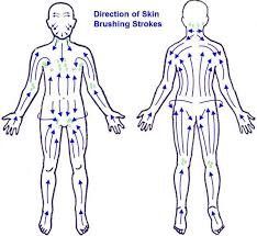 Dry Skin Brushing Chart Lymphatic Brushing Chart How To Get The Best Results From