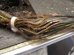 wiring harness rebuilders wiring image wiring diagram wiring harness restoration repair rebuilding customizing on wiring harness rebuilders