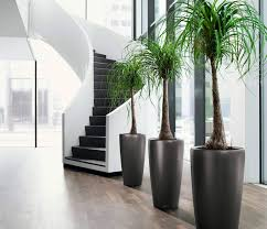 office flower pots. looking for the best indoor u0026 office plants hire company in melbourne then no need to worry foliage plant is an experienced offering flower pots c