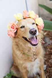 have you seen anything cuter than a dog in a flower crown i just about d when i placed one on finn s head