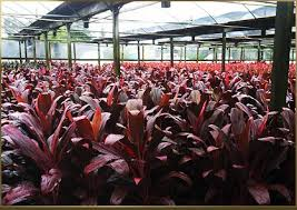 we pride ourselves with exceptional quality plant material and offer our customers superior customer service tree nursery tampa l45