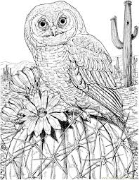 Owl Coloring Pages Colored Futuramame