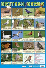 British Birds Poster By Chart Media Chart Media