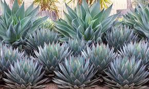 plant combination ideas region france