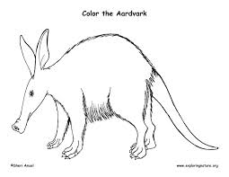 Small Picture Aardvark Coloring PagesColoringPrintable Coloring Pages Free