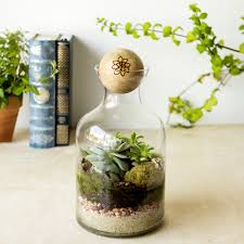 56-ounce Glass Succulent Terrarium with Wood Stopper - Free Shipping Today  - Overstock.com - 19160785