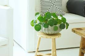 house plants. 32 Beautiful Indoor House Plants That Are Also Easy To Maintain
