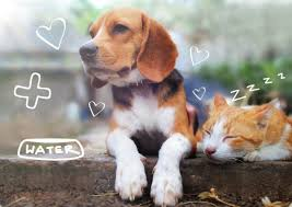 Pet Names | Top 10 Most Popular Names for Dogs & Cats | MiPet Cover