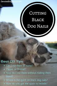 t black dog nails