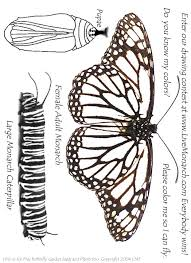 Small Picture Stunning Monarch Caterpillar Coloring Page Photos New Printable