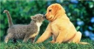cute puppies and kittens kissing. Perfect Puppies Puppies And Kittens KissingWonderful Kissing For Cute Kittens Kissing H