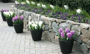 potted plants for patio gorgeous patio pot plants ideas patio potted plant and flower ideas creative potted plants for patio