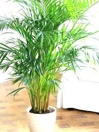 Best indoor plants for office Snake Plant Low Maintenance Indoor Plants For Office Low Maintenance Office Plants Best Office Plants For Reducing Pollutants Low Maintenance Indoor Plants For Office Shopee Singapore Low Maintenance Indoor Plants For Office Best Indoor Plants For Men