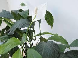 Luftreinigende Pflanzen Fürs Schlafzimmer Lagerhaus Landforst