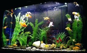 fish tank decorations aquarium decorations the aquarium setup filtration and maintenance site you diy fish tank