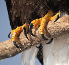 Image result for talons