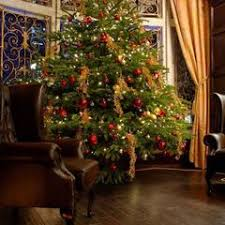 13 Ft. Fraser Fir Christmas Tree with Lights (New Orleans Area Only) by