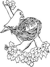 Small Picture Bird On Nest Spring Animal Coloring Pages Animal Coloring Pages