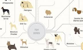 A Chart Of Dogs The Family Tree Of Dogs Infographic Reveals How Every Breed