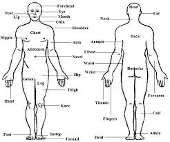 Human Body Parts Chart In English Human Body Parts Names In English And Hindi List Of Body