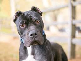 14 Dog Breeds Blacklisted By Insurance Companies