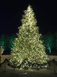beautiful and sparkling longwood tree