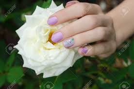 White Rose Nail Design Female Hands With Lilac Nail Design Holding White Rose