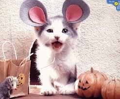 cute kittens in halloween costumes. Contemporary Halloween Cute Kitten Parties In Rabbit Outfit On Kittens In Halloween Costumes