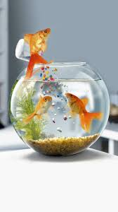 galaxy s3 goldfish in water hd 720x1280