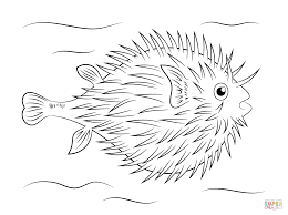 Small Picture Puffer Fish Coloring Pages Free Fish And Ocean Life Coloring
