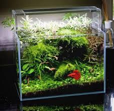 Decorative Betta Fish Bowls How To Take Care Of A Betta Fish Best Betta Fish Tank 51