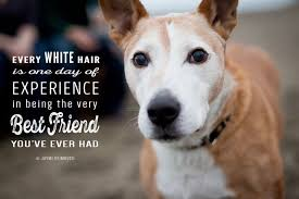 Quotes About Dogs Inspiration 48 Quotes About Dogs That Will Warm Your Heart MNN Mother Nature