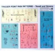Canine Trigger Point Chart Trigger Point Pain Patterns Chart Poster Set Of 2