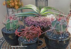 easier to maintain if plant in containers are kept away from deciduous trees perhaps i should consider more of container gardening with succulents