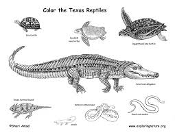 Small Picture Texas Reptiles Coloring Page