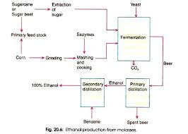 Ethanol Production Process Flow Chart Production Of Ethanol Microbiology