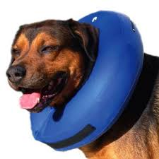 stop dog from licking wound. Brilliant Dog ProCollar Cone Alternative To Stop Dog Licking A Wound Throughout Stop Dog From Licking Wound
