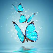 Flying Butterfly Wallpapers - Top Free ...