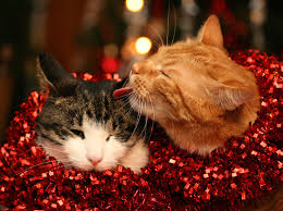 Image result for christmas cat images