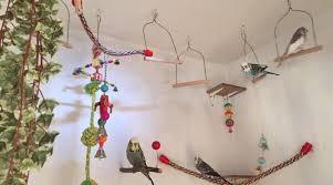jen jane s beautiful budgie aviary diy parakeet home