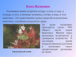 реферат на тему насекомые класс с картинками Школьные Знания com Загрузить jpg