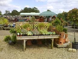 plant table at roman way garden centre