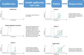 Ion Exchange Chromatography Creative Biostructure